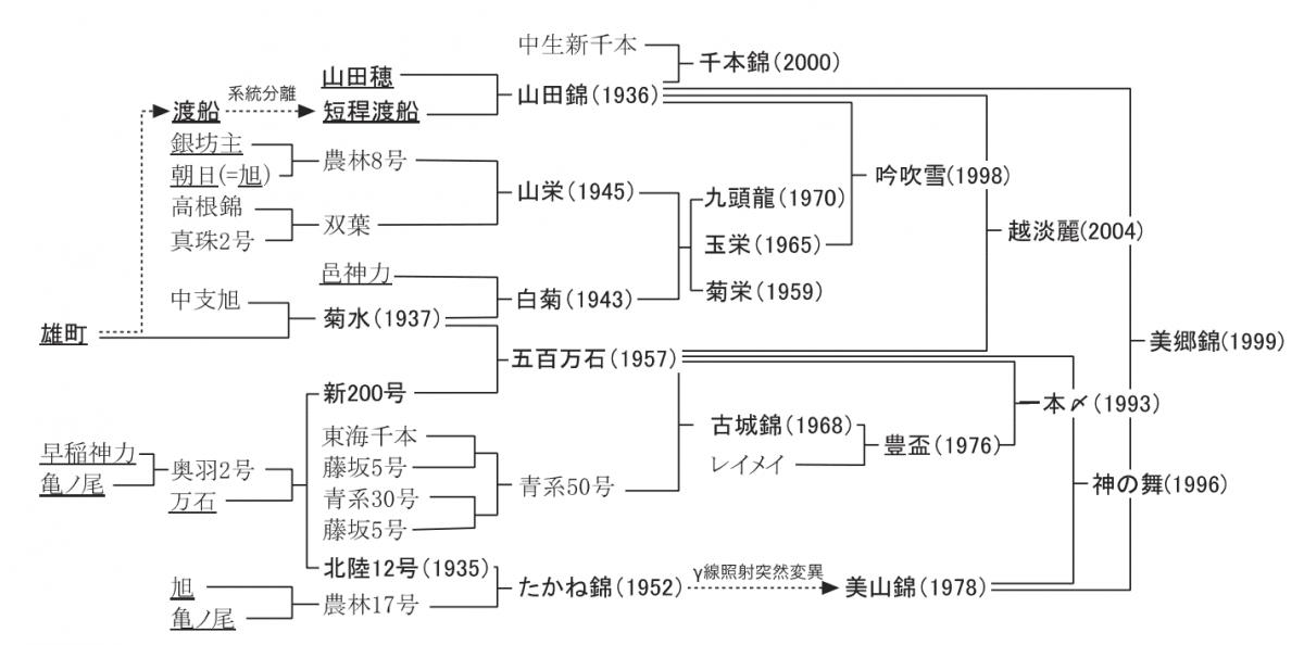 酒米品種の系譜