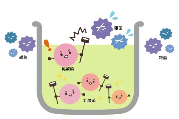 乳酸菌の働き|図解
